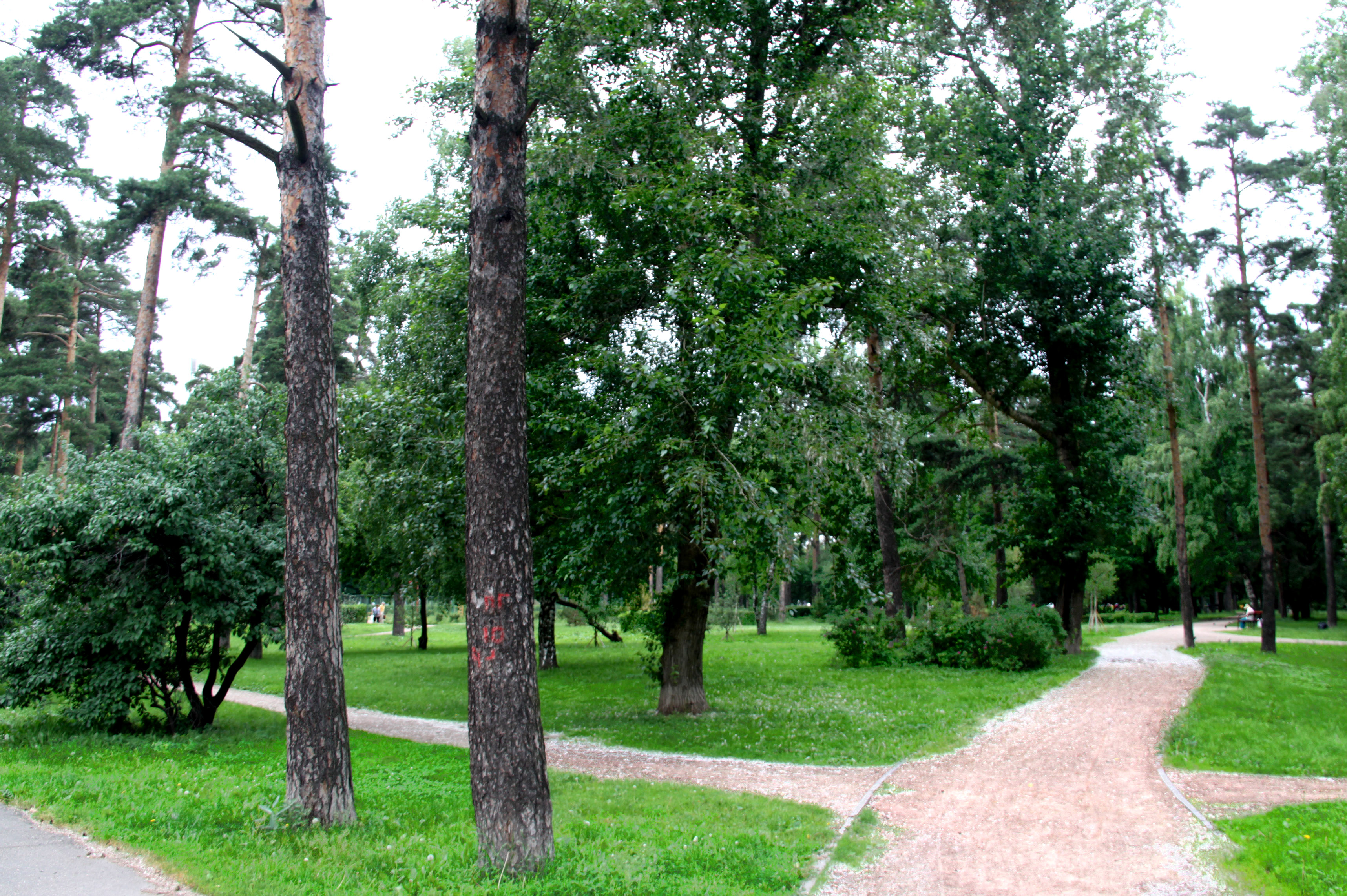 москва парк сосенки фото работах присутствует