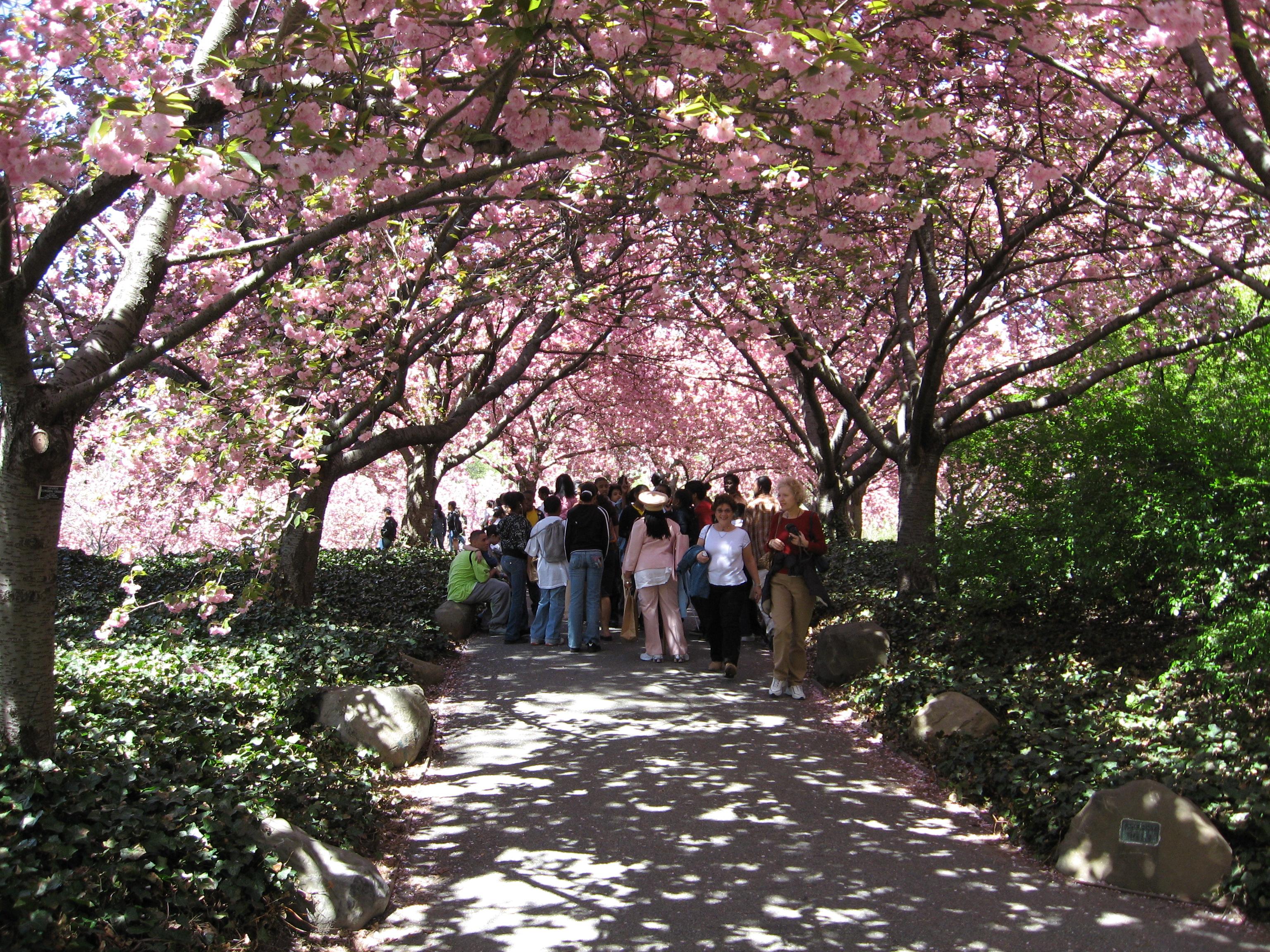 File Brooklyn Botanical Wikimedia Commons