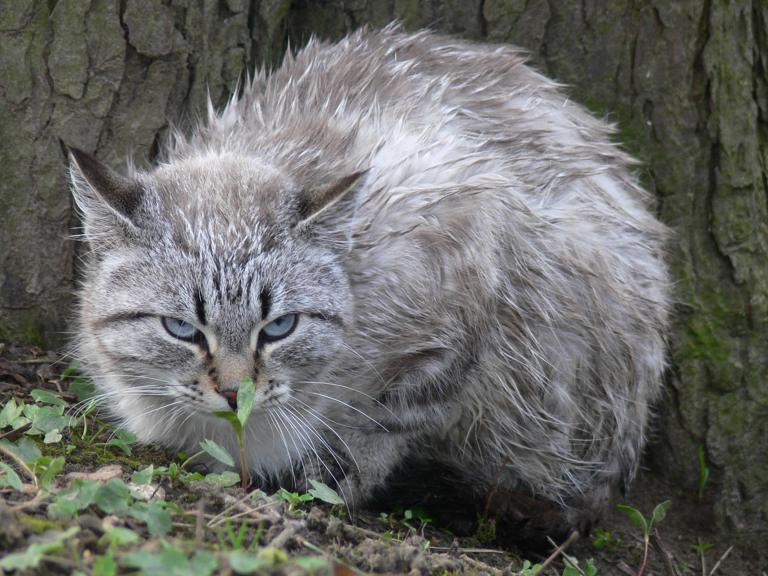 maladies des chats peau