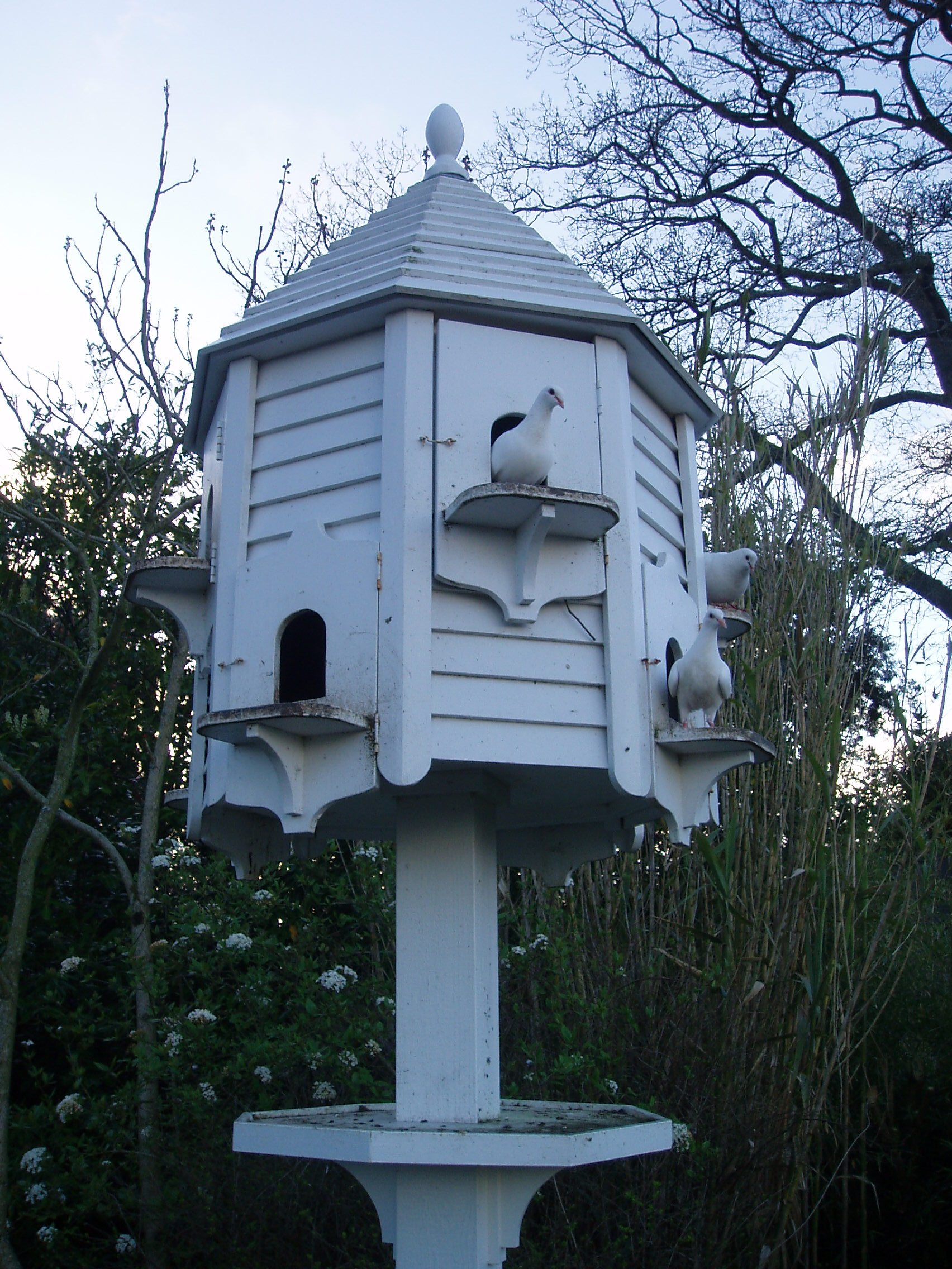 File dove wikimedia commons for Dove bird house