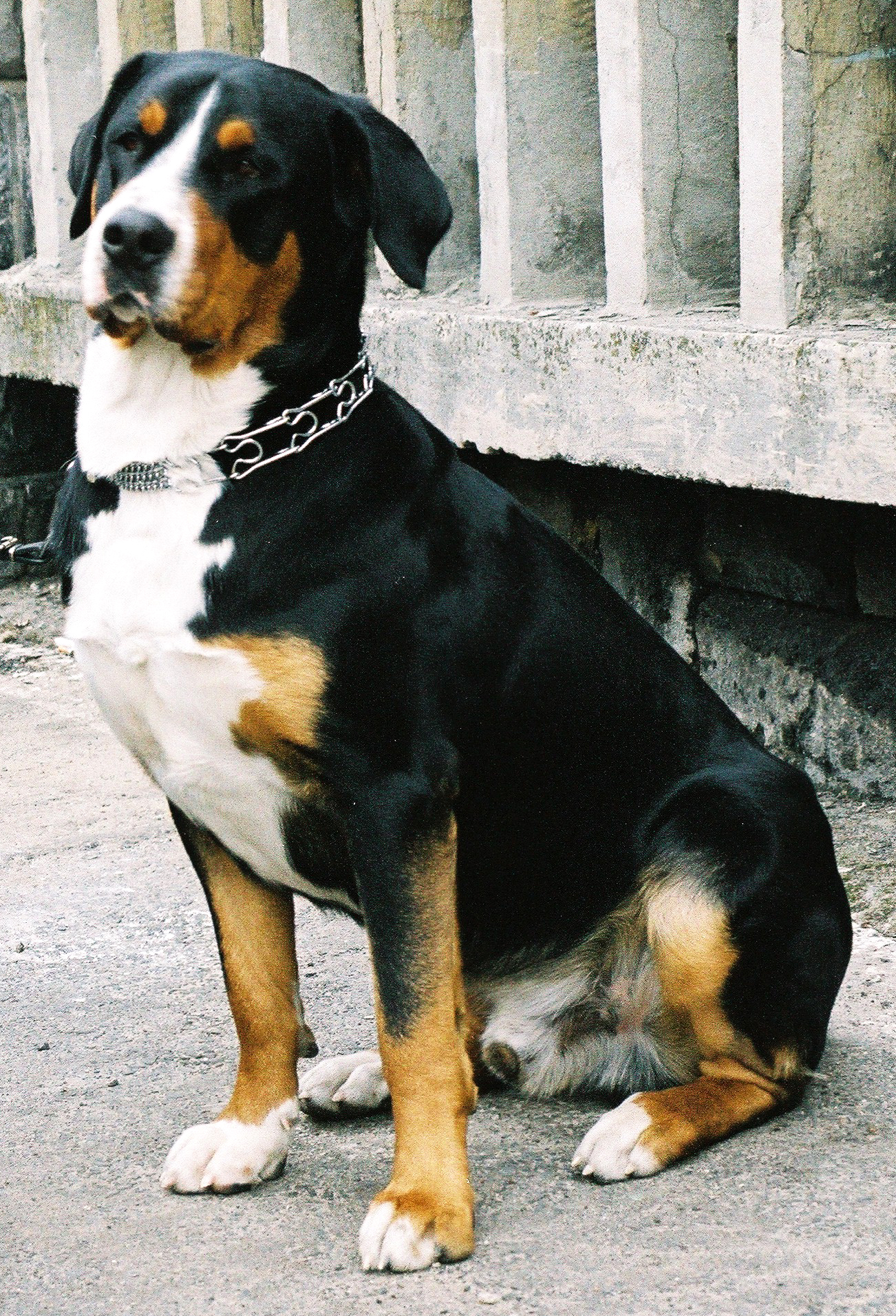 pixelmed bernes mountain dog
