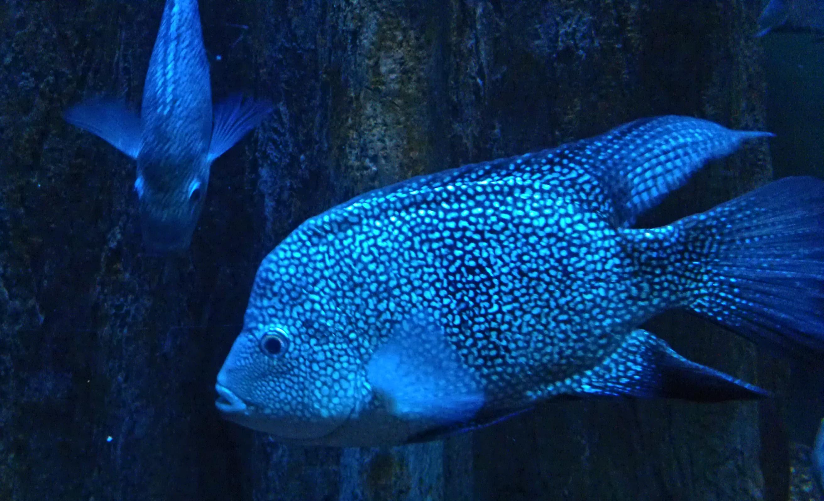 Image Result For Audubon Aquarium Of The Americas
