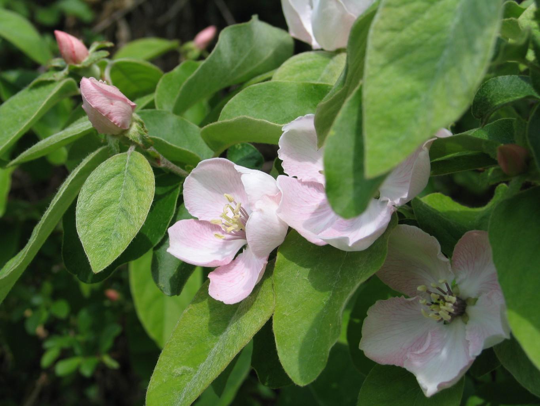 File fleurs et feuilles de for Fleurs et fleurs