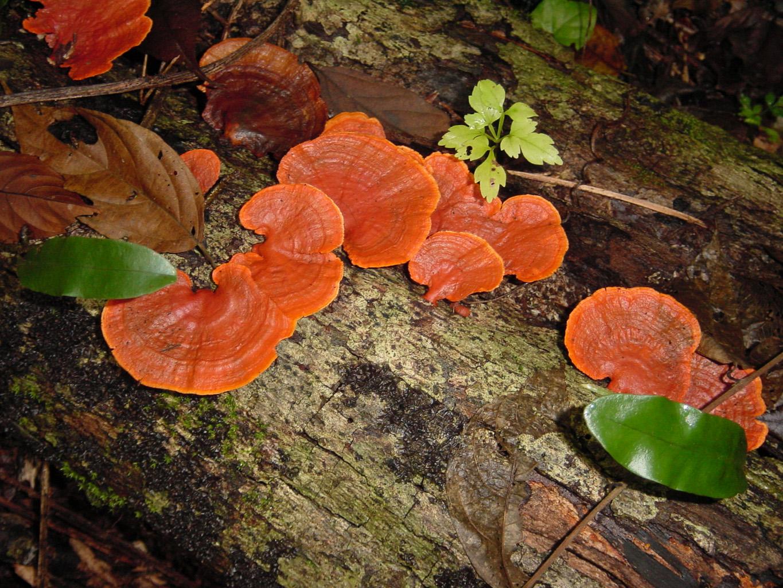 Fungi; Fungi, Filamentous; Mildew; Molds