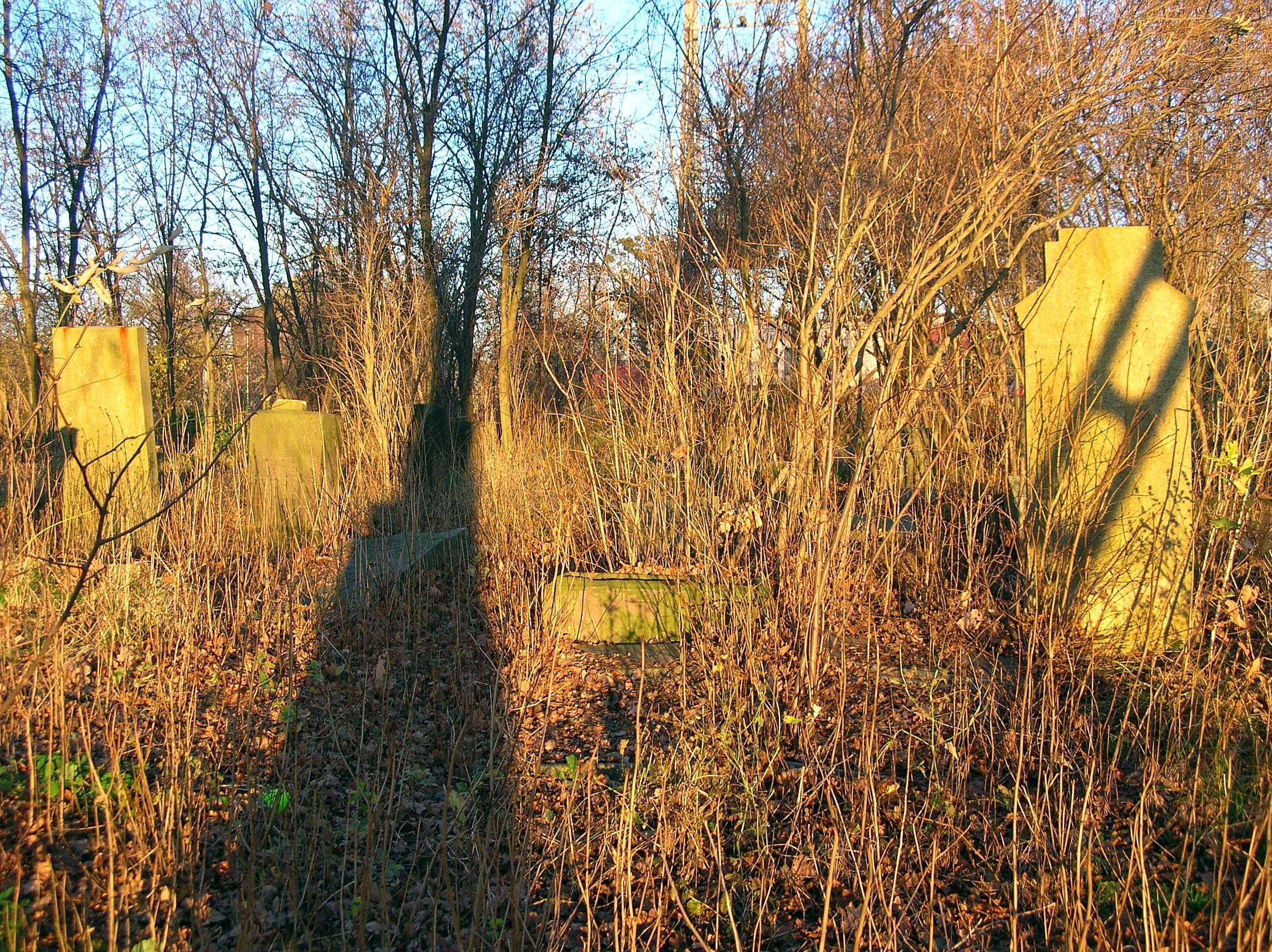 File:Jewish cemetery in Oława 163a.jpg - Wikimedia Commons