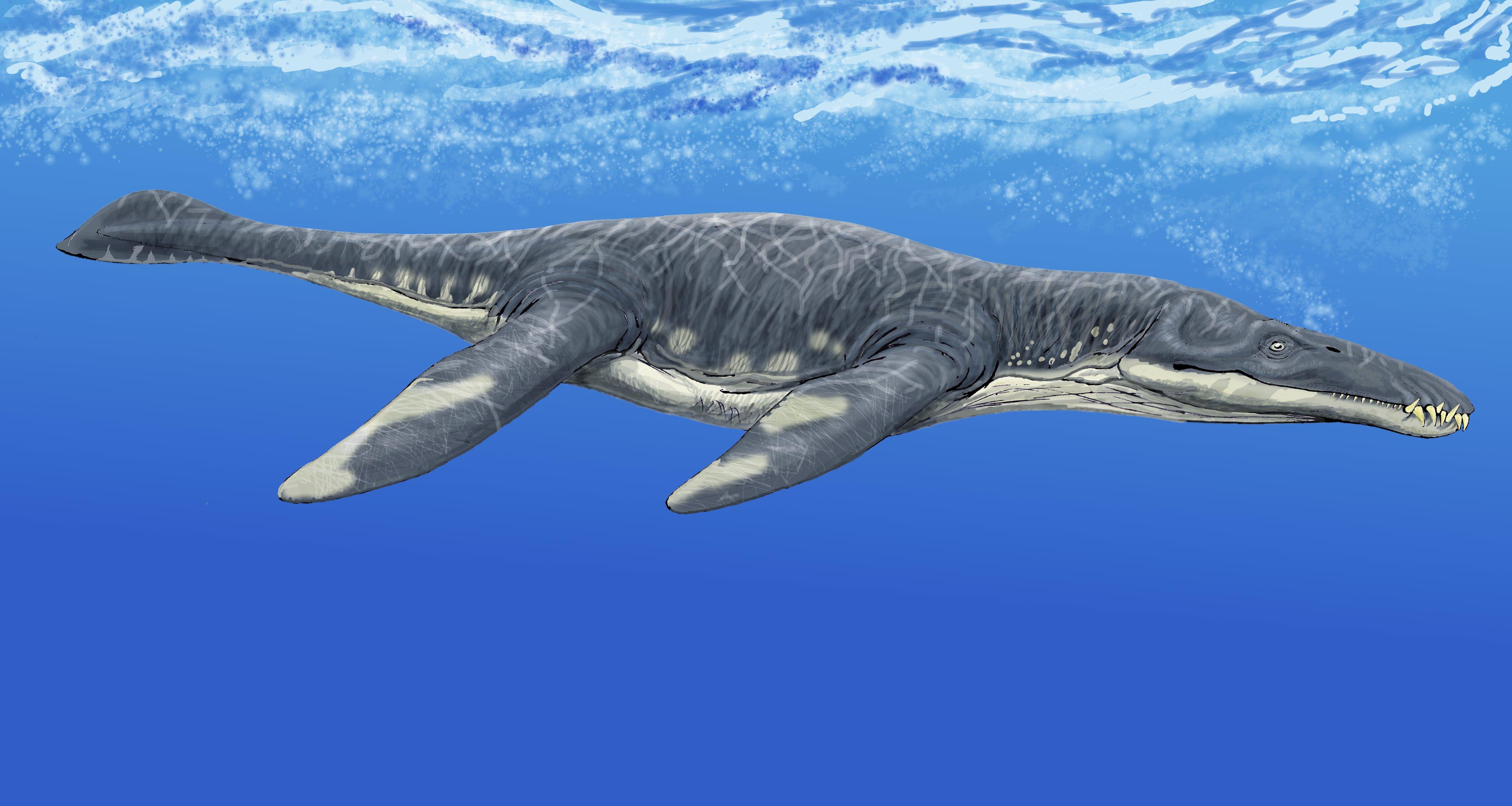 Liopleurodon_after_Tarlo.jpg