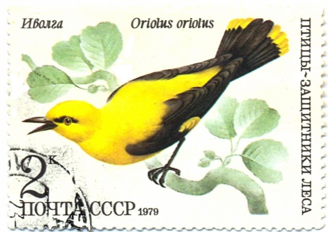 Stamp featuring an Oriolus oriolus