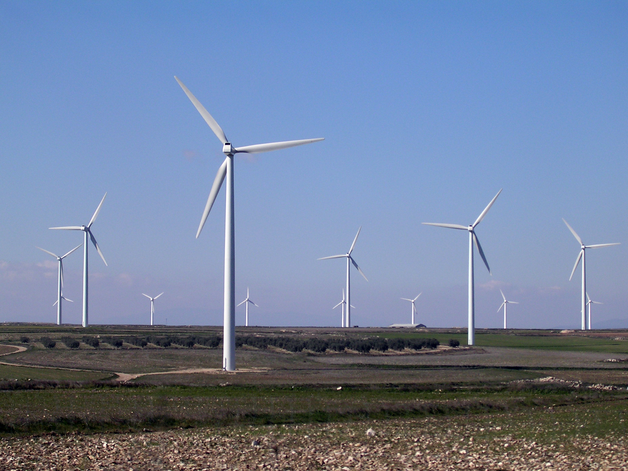 A wind farm of about a dozen three-bladed white wind turbines.