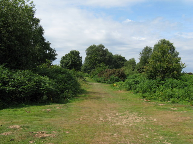 Red House Common - geograph.org.uk - 1386077