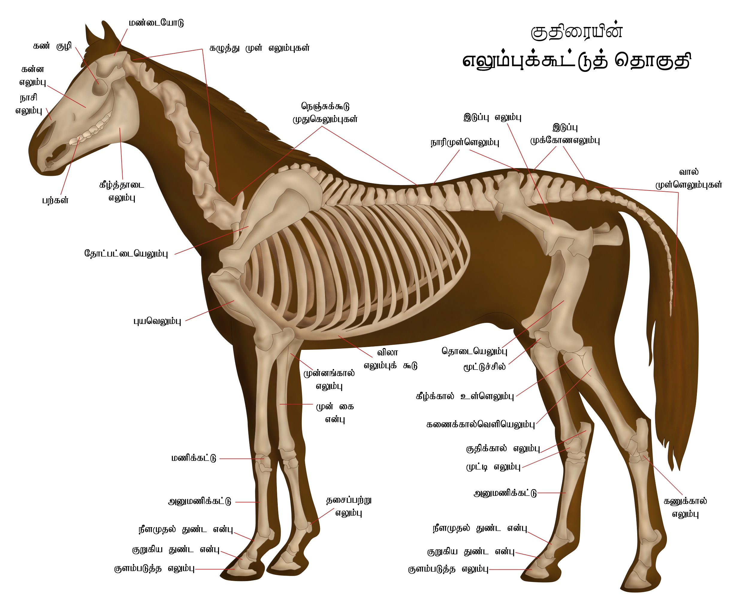 File:Skeletal system of horse (Tamil).png - Wikimedia Commons
