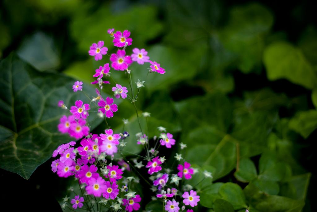 File Tiny Flowers 3071341138 Jpg Wikimedia Commons