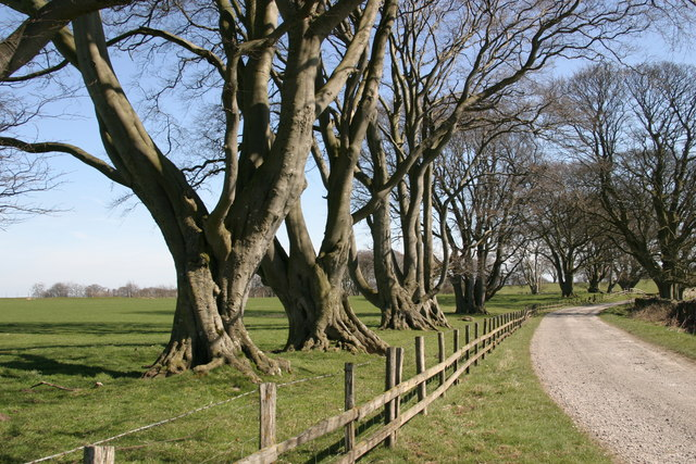Track from Shaftoe Crags to Bolam West Houses - geograph.org.uk - 387817