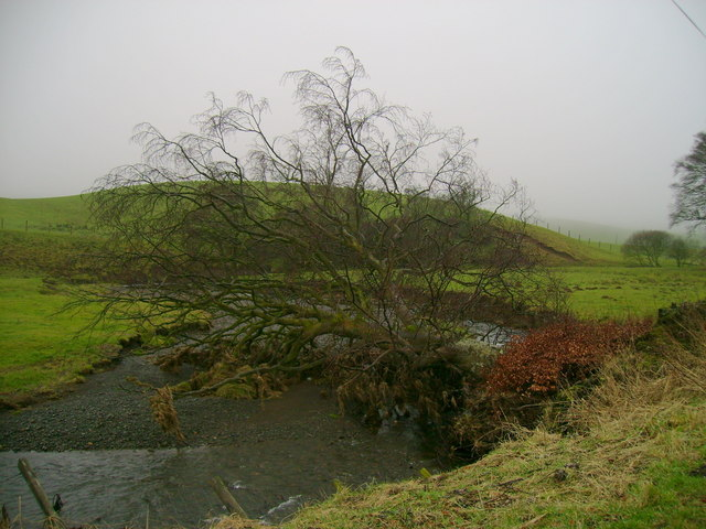 File:Tree fallen over Water of Assel - geograph.org.uk - 1177152.jpg