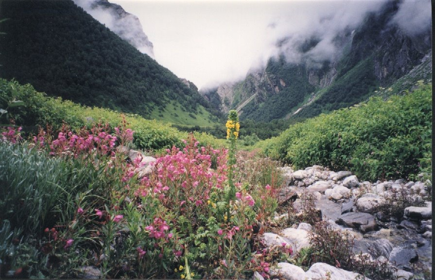 Himalayan Valley of Flowers National Park