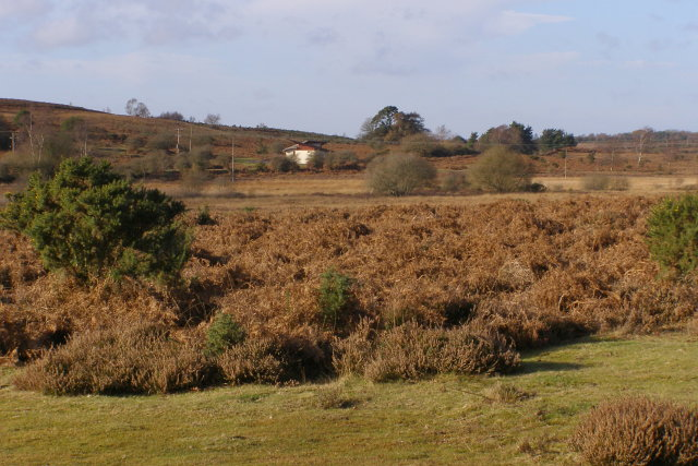 View across Holmsley Bog towards Holmsley Passage, New Forest - geograph.org.uk - 624841