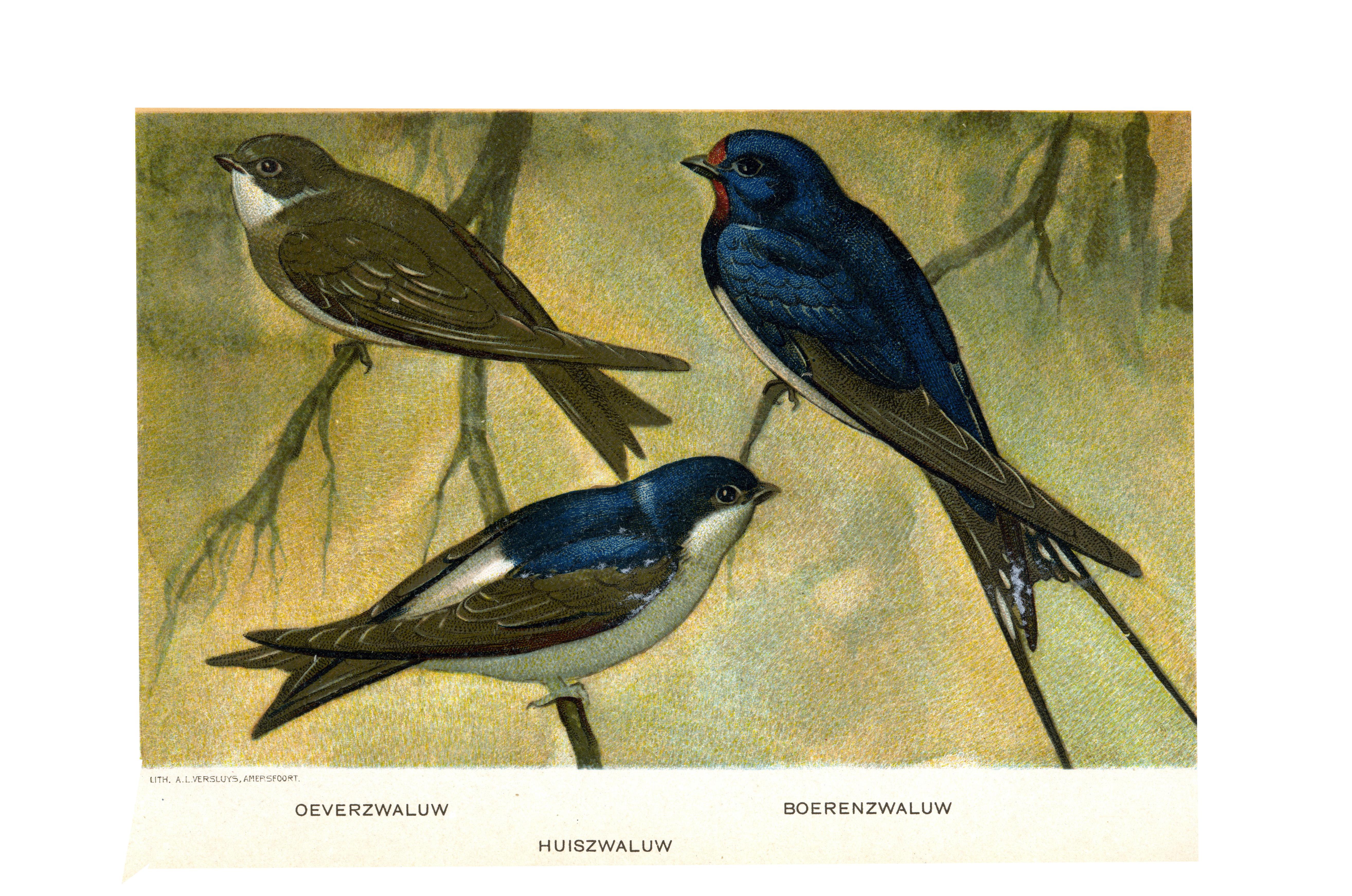 hastighet dating Bluebird