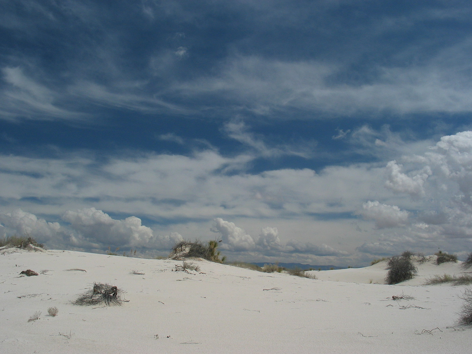 http://upload.wikimedia.org/wikipedia/commons/e/e2/White_sands_vegetation.jpg