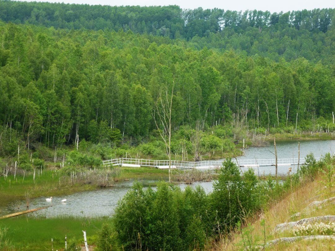 Zechausee im Naturschutzgebiet Restloch Zechau (Mai 2012)