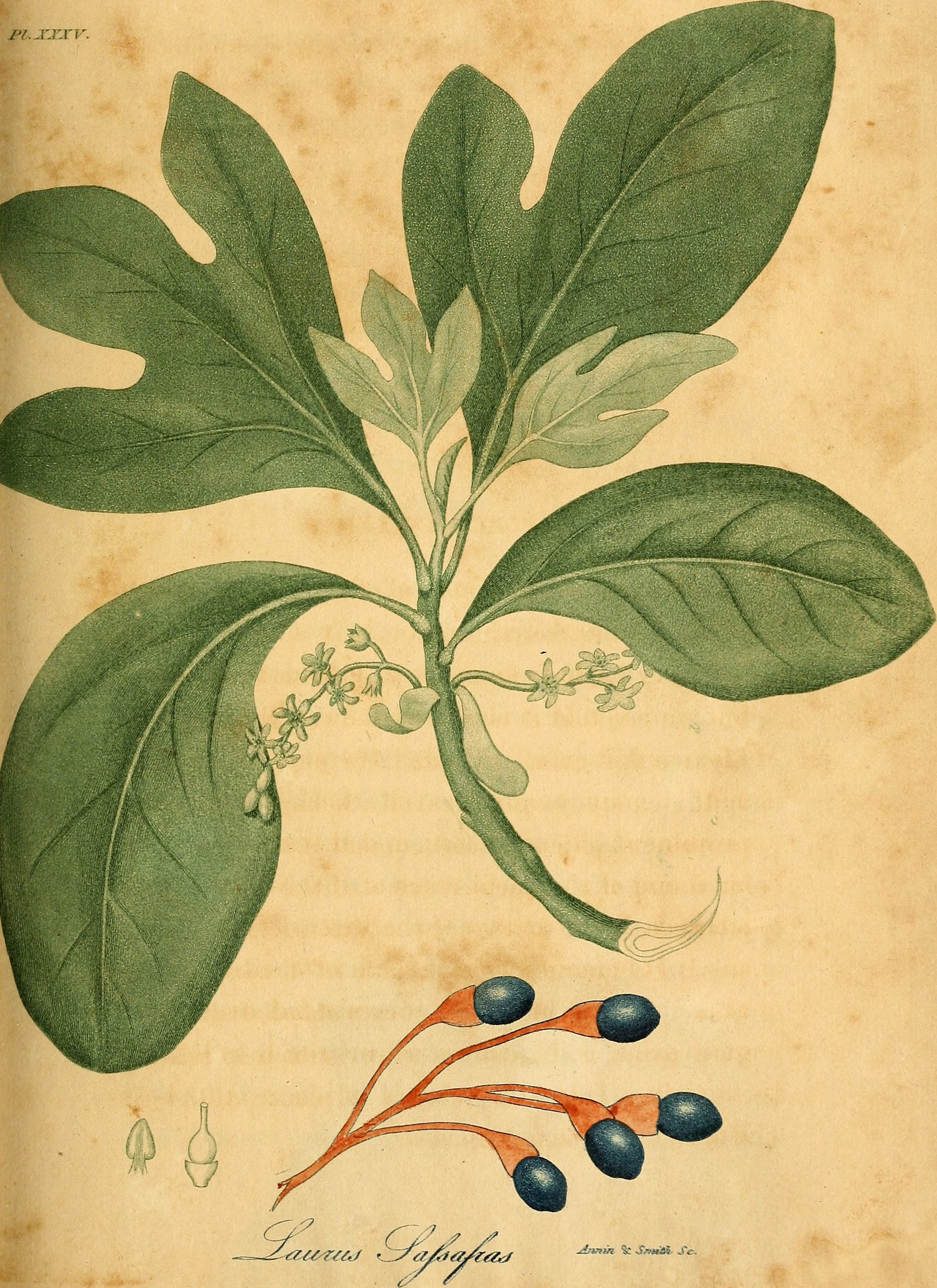 Medicinal plants and their details