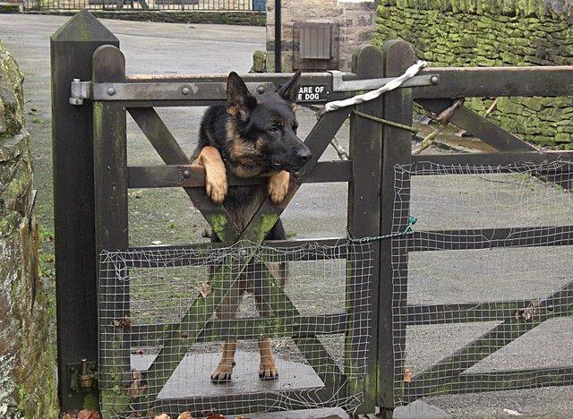 Vakthund Wikipedia