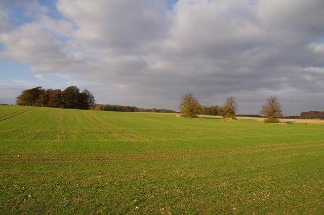 File:Brocklesby Park - geograph.org.uk - 599347.jpg