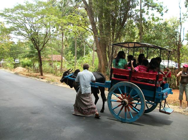 File:Bull cart ride sigiriya.jpg