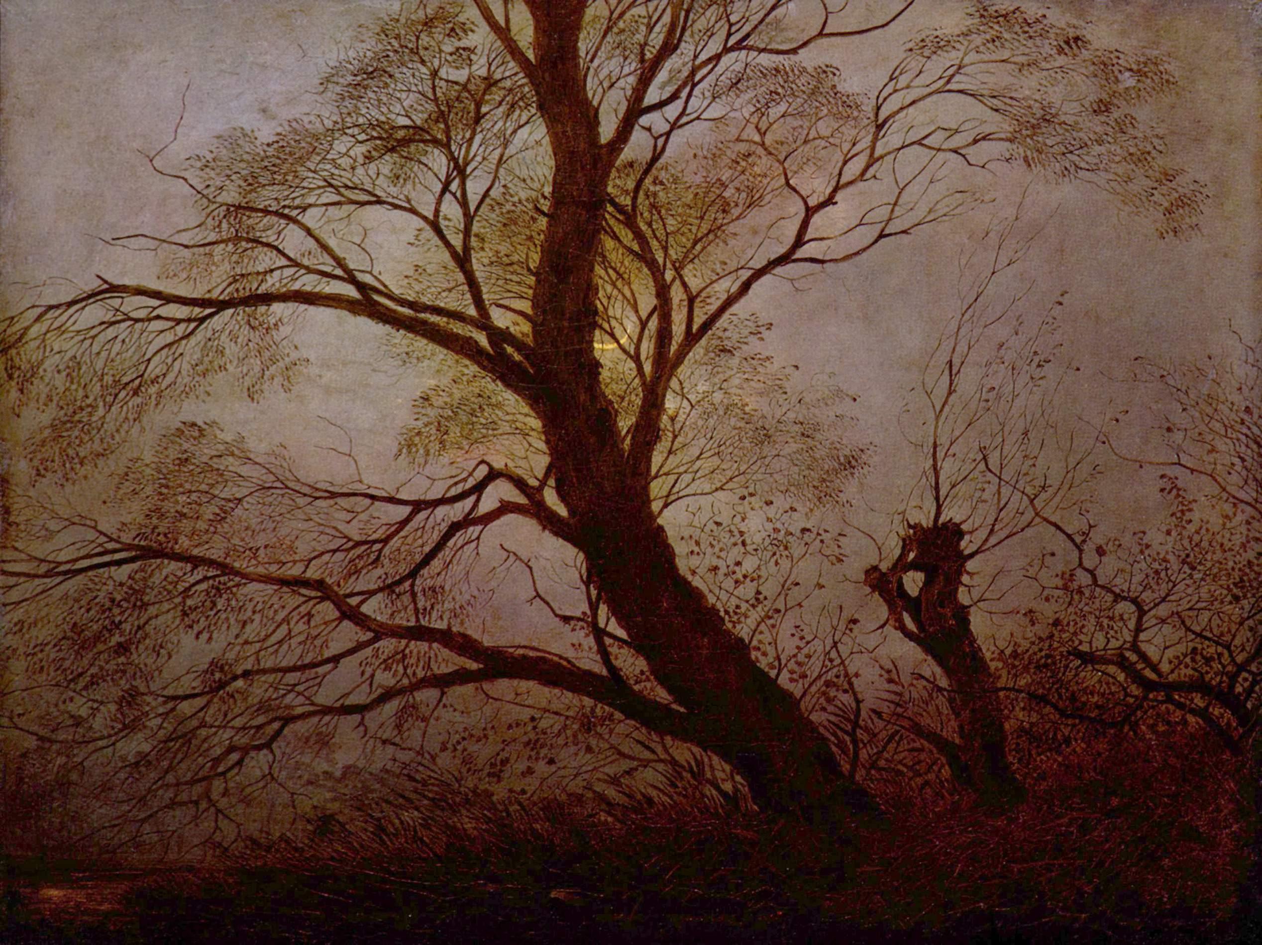 Baum-Ring datiert Schöpfung