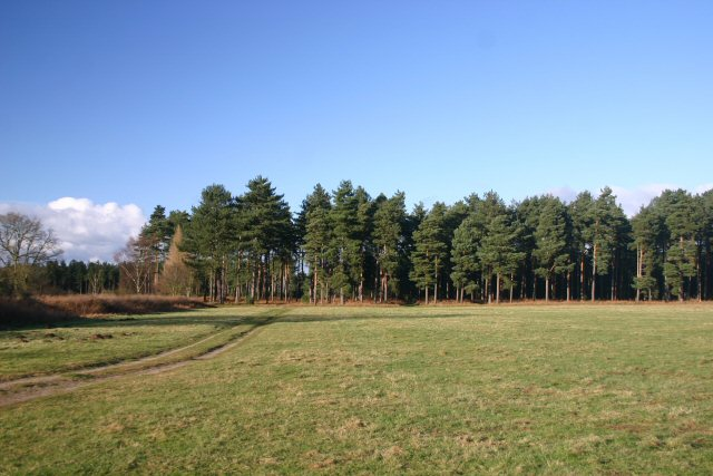 Clearing in Thetford Forest - geograph.org.uk - 319892