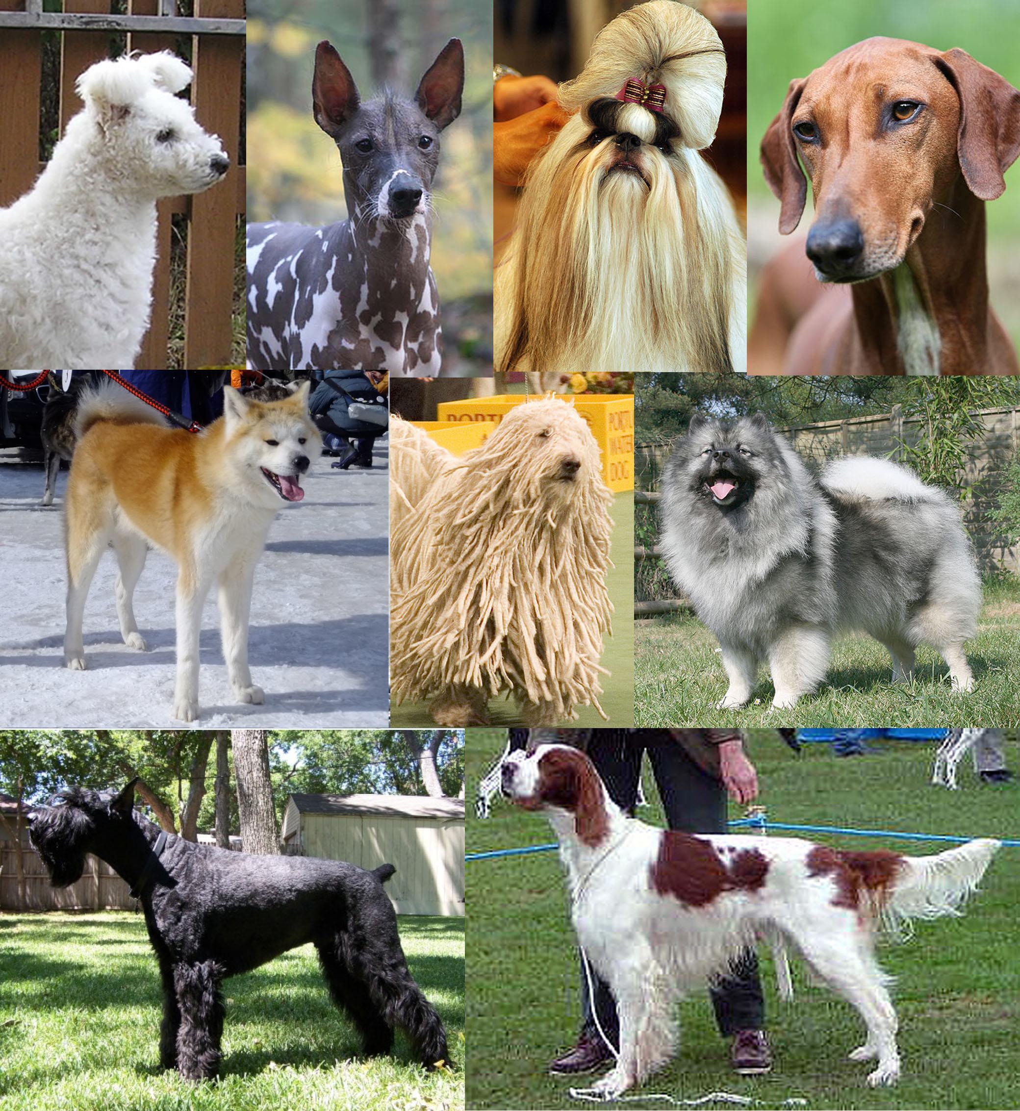 Depiction of Canis lupus familiaris