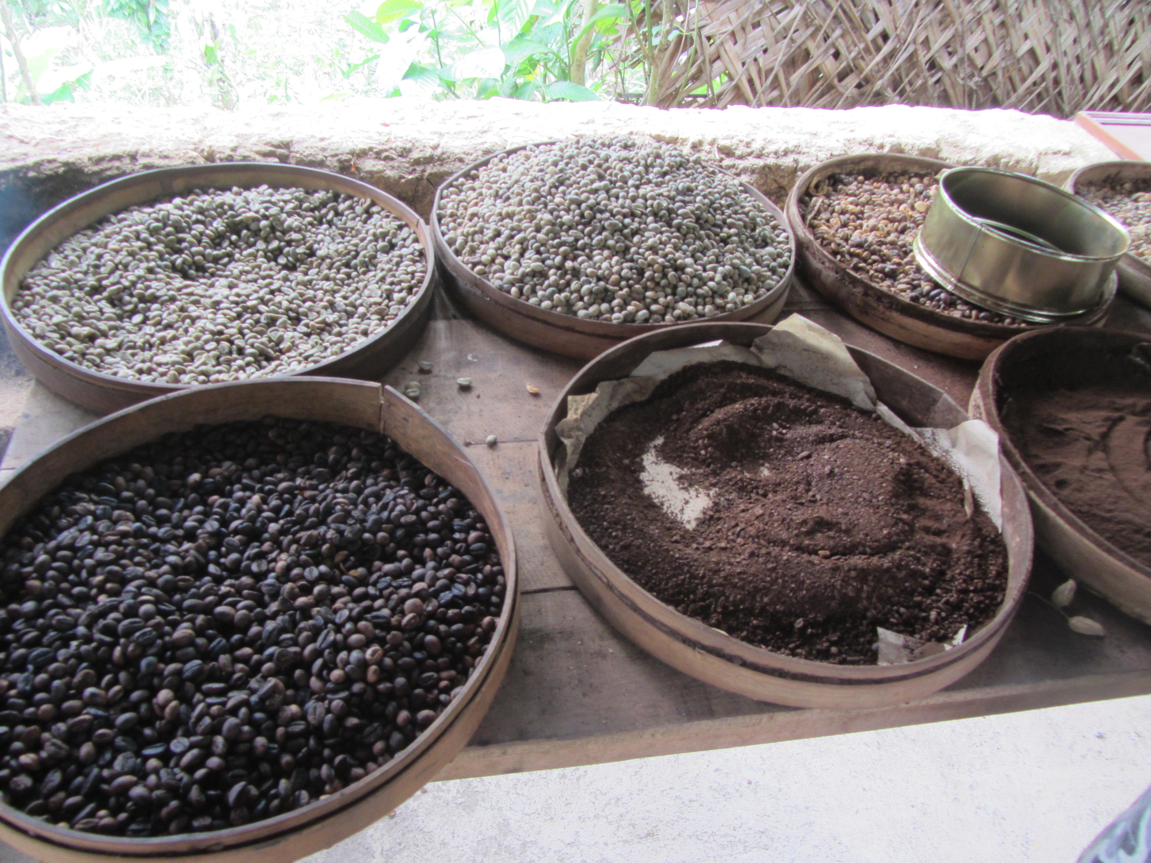 FileCoffee Beans In Bali