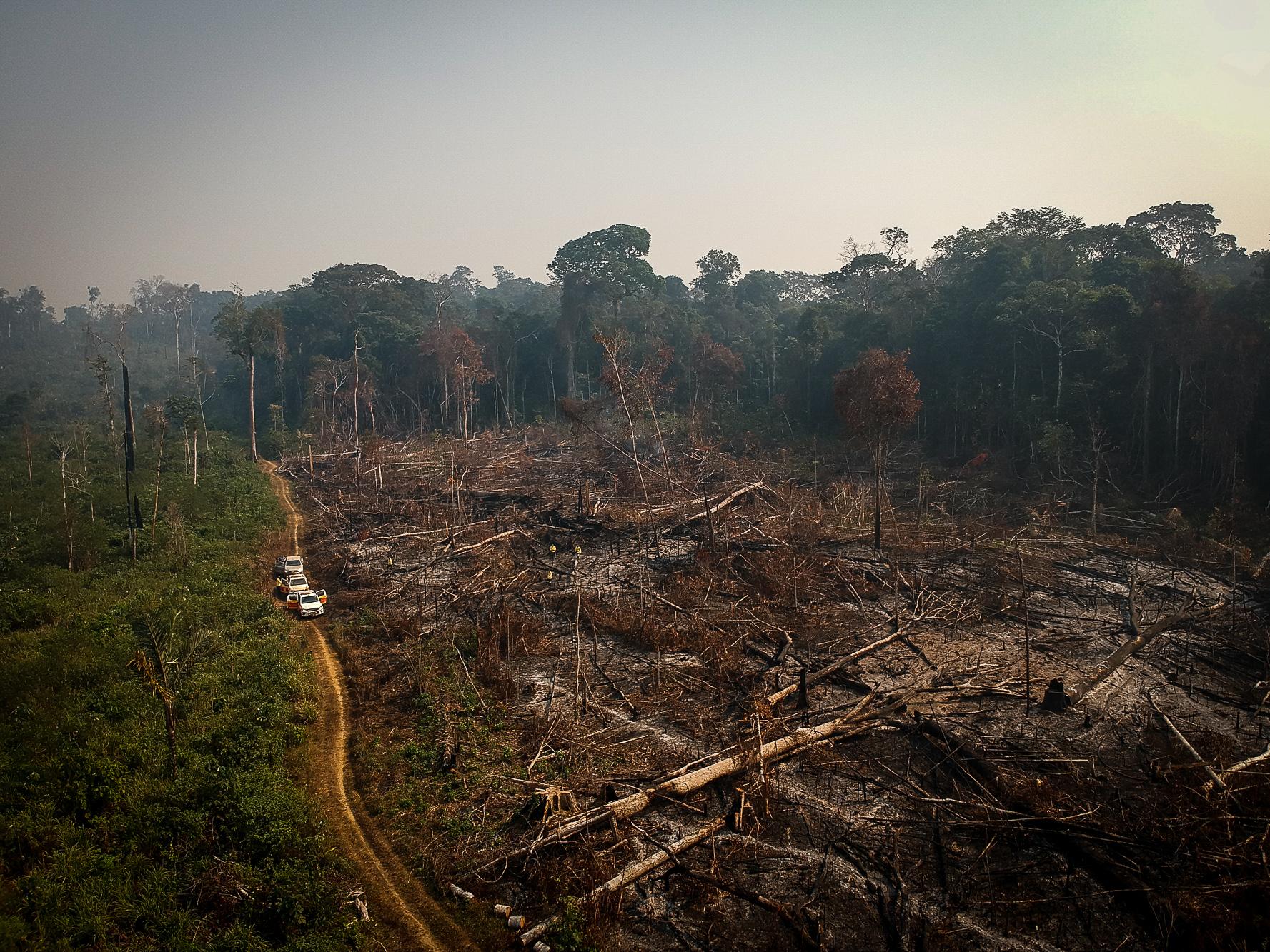 Amazonian Communities Urge International Action & Amazon.com Invests in Restoration