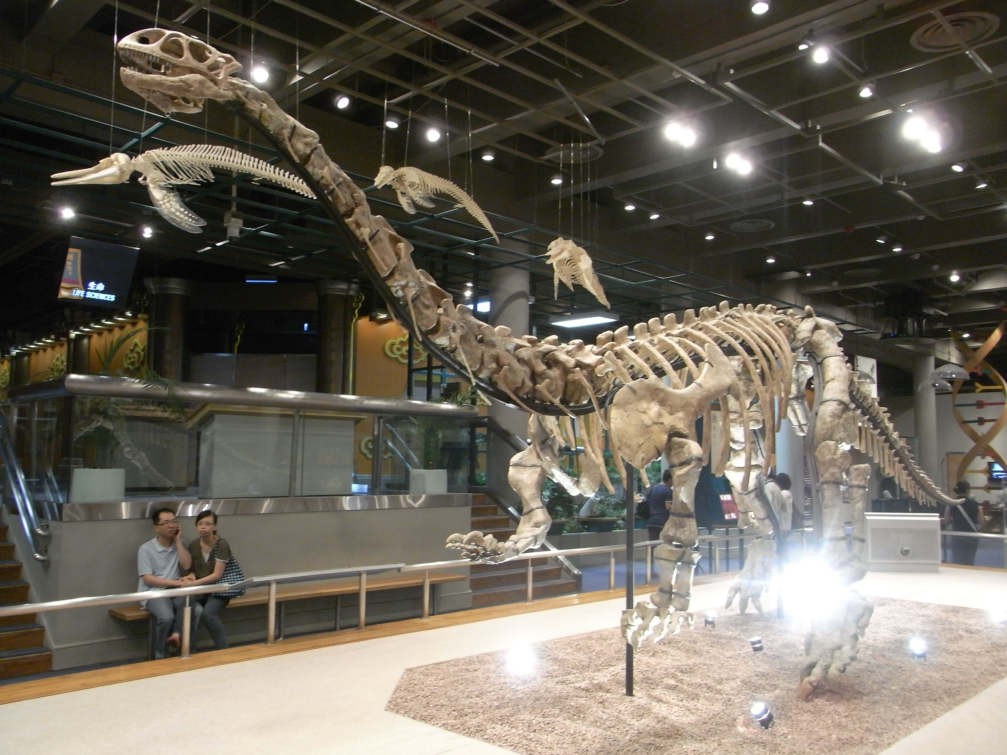 Museum Of Natural History New Dinosaur Exhibit