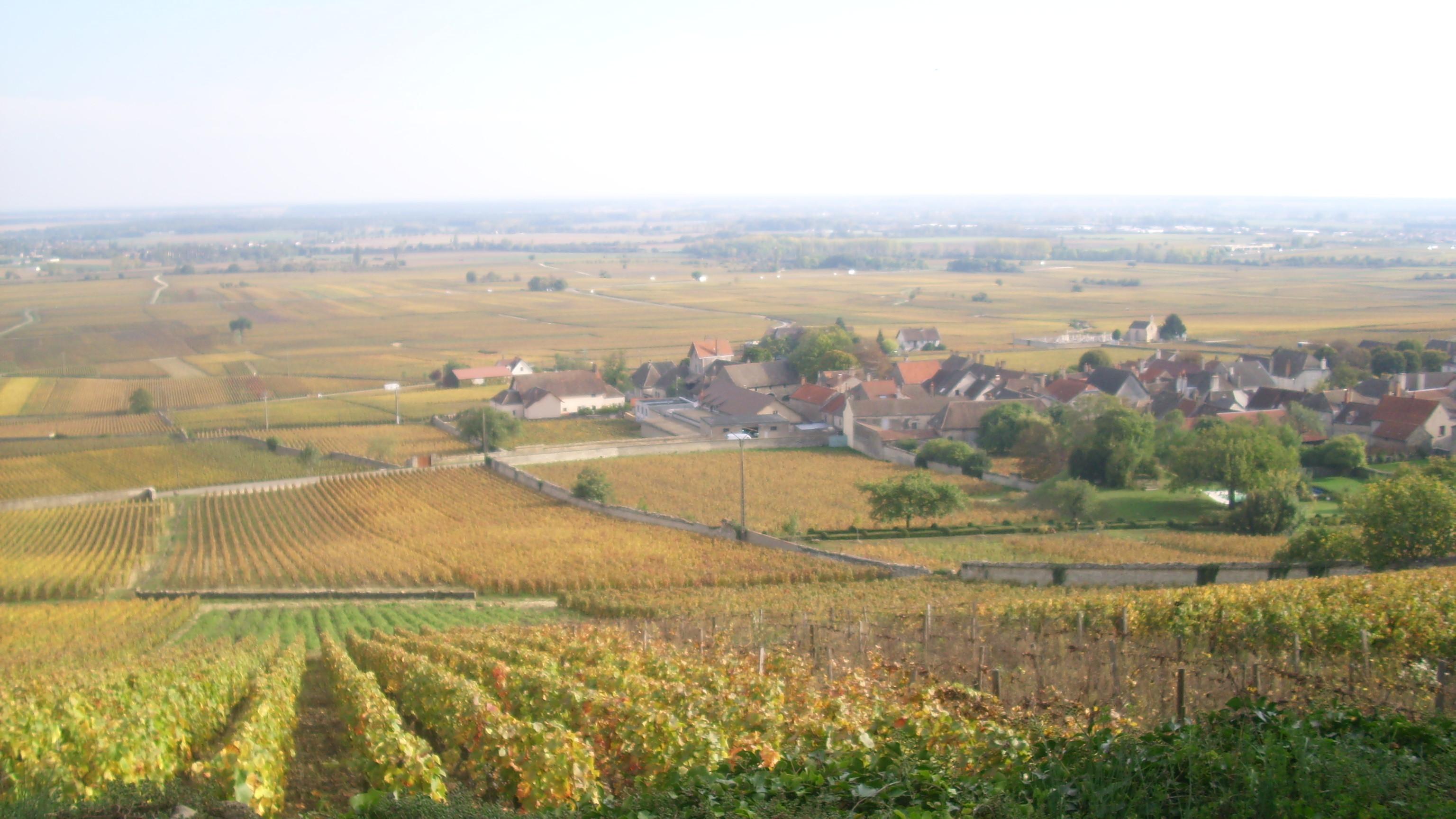 Volnay Wine Wikipedia