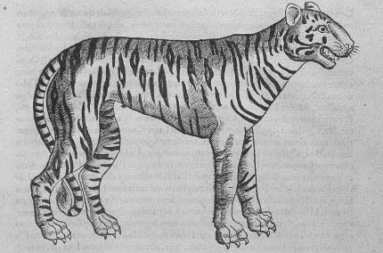 Fichier:Illustrations de Icones animalium quadrupedum viviparorum et oviparorum-Tigre.jpeg
