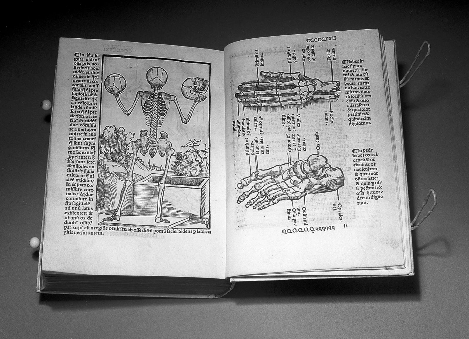 File:J.C. Berengarius; \