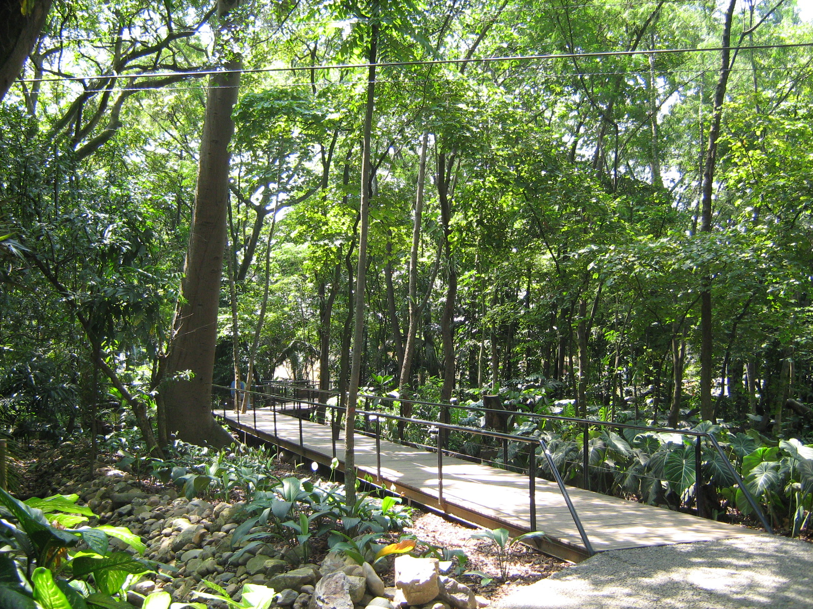Archivo jardin botanico de medellin bosque tropical 2 for Jardin wikipedia