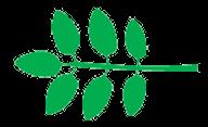 forme foliaire , imparipennée