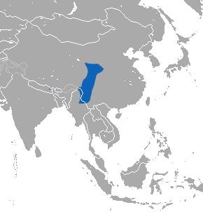 Lesser striped shrew Species of mammal