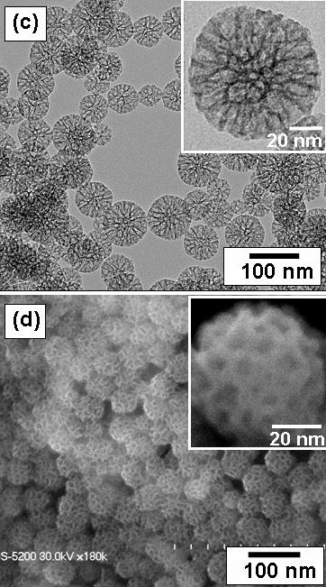 Image result for mesoporous silica