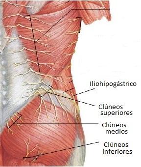 dolor perineal medio