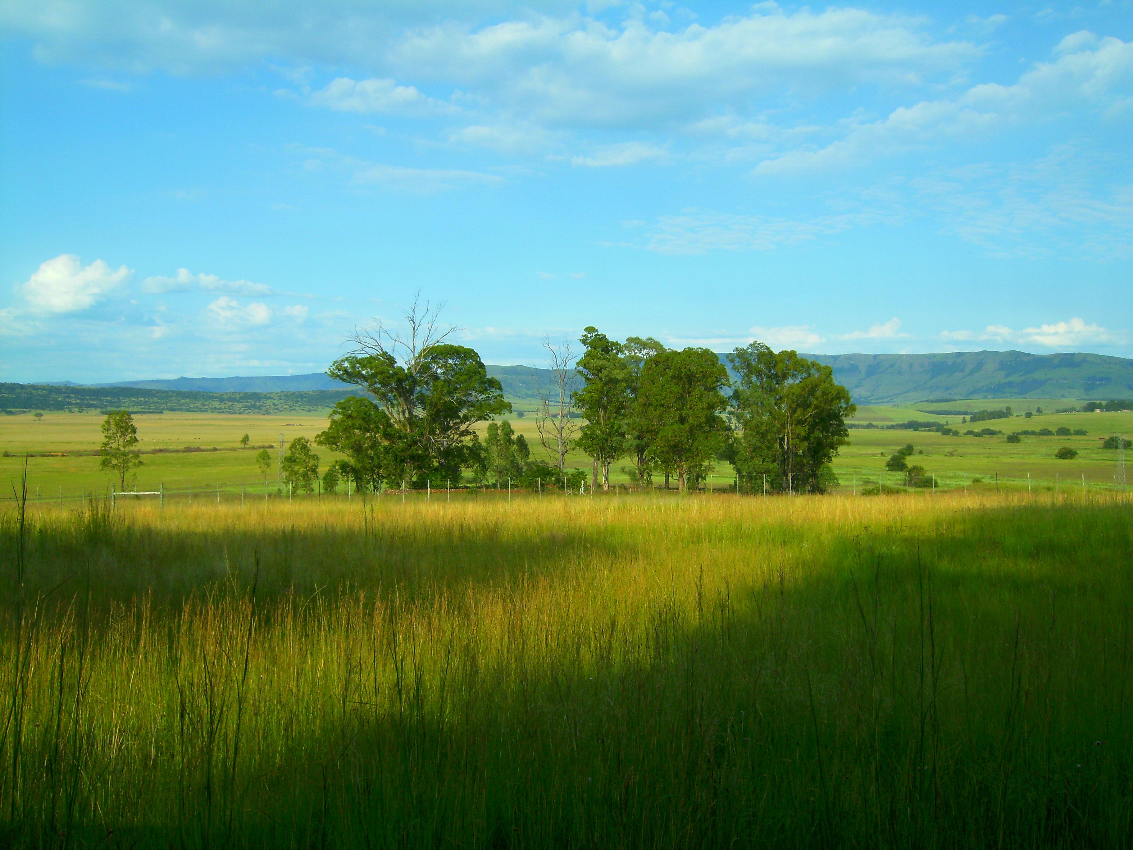 Guma iz Južne Afrike