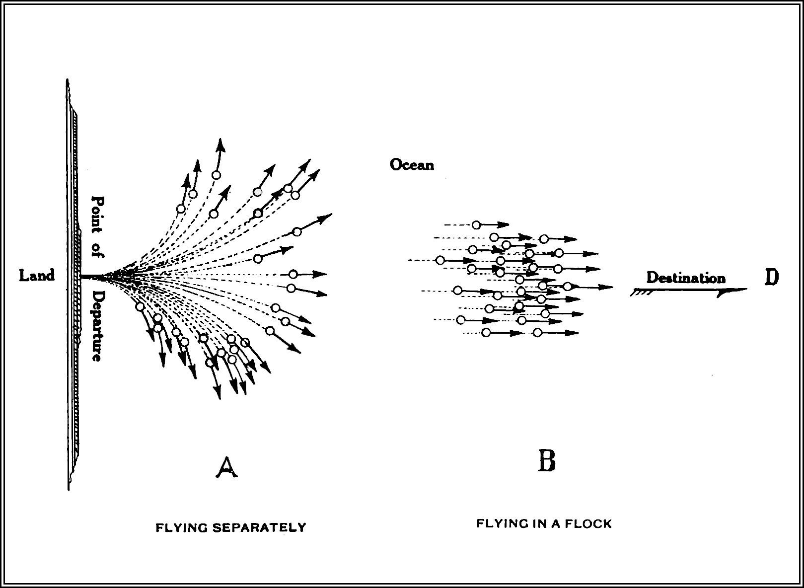 PSM V84 D215 Flocking habit of migratory birds fig2.jpg