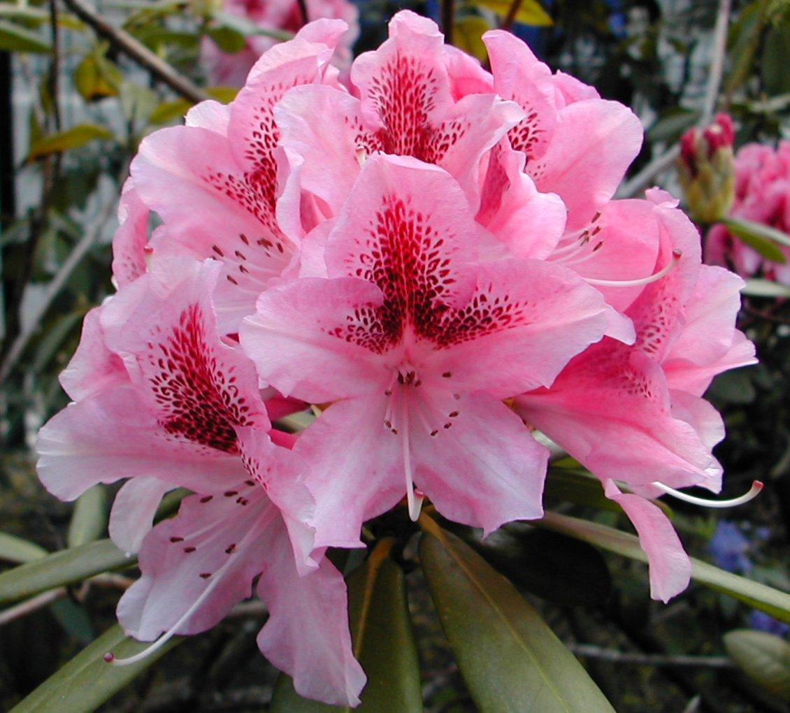 growing english gardens