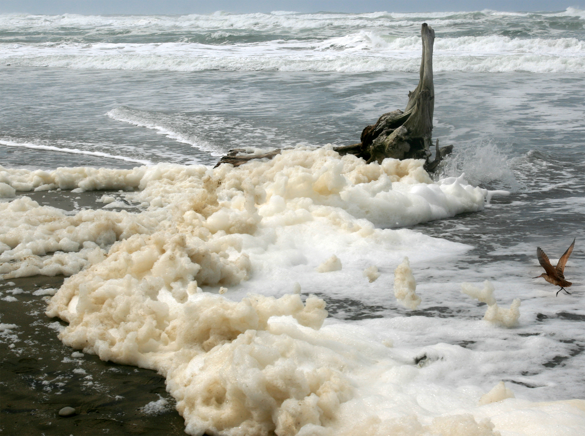 Image result for free images storm blowing sea foam across wet sand