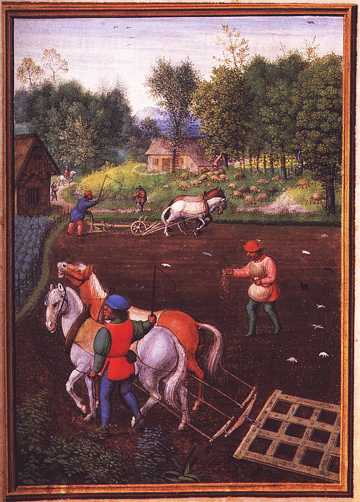 Statt des üblichen September-Motivs der Weinlese zeigt Simon Bening im 16. Jahrhundert das Eggen, Pflügen und Säen des Wintergetreides. München, StB, cod. lat. 23638, fol. 10v.