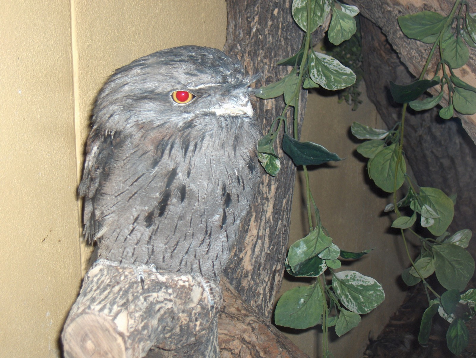 https://upload.wikimedia.org/wikipedia/commons/e/e3/Tawny_frogmouth_denver.jpg