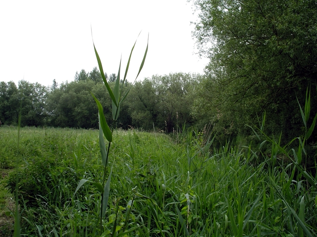 Winnall Moors Nature Reserve - geograph.org.uk - 201603