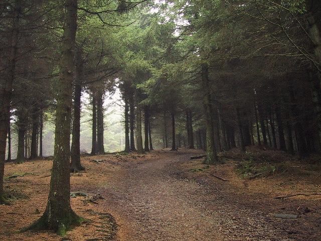 Woodland at Beacon Fell Country Park, Near Preston - geograph.org.uk - 95836