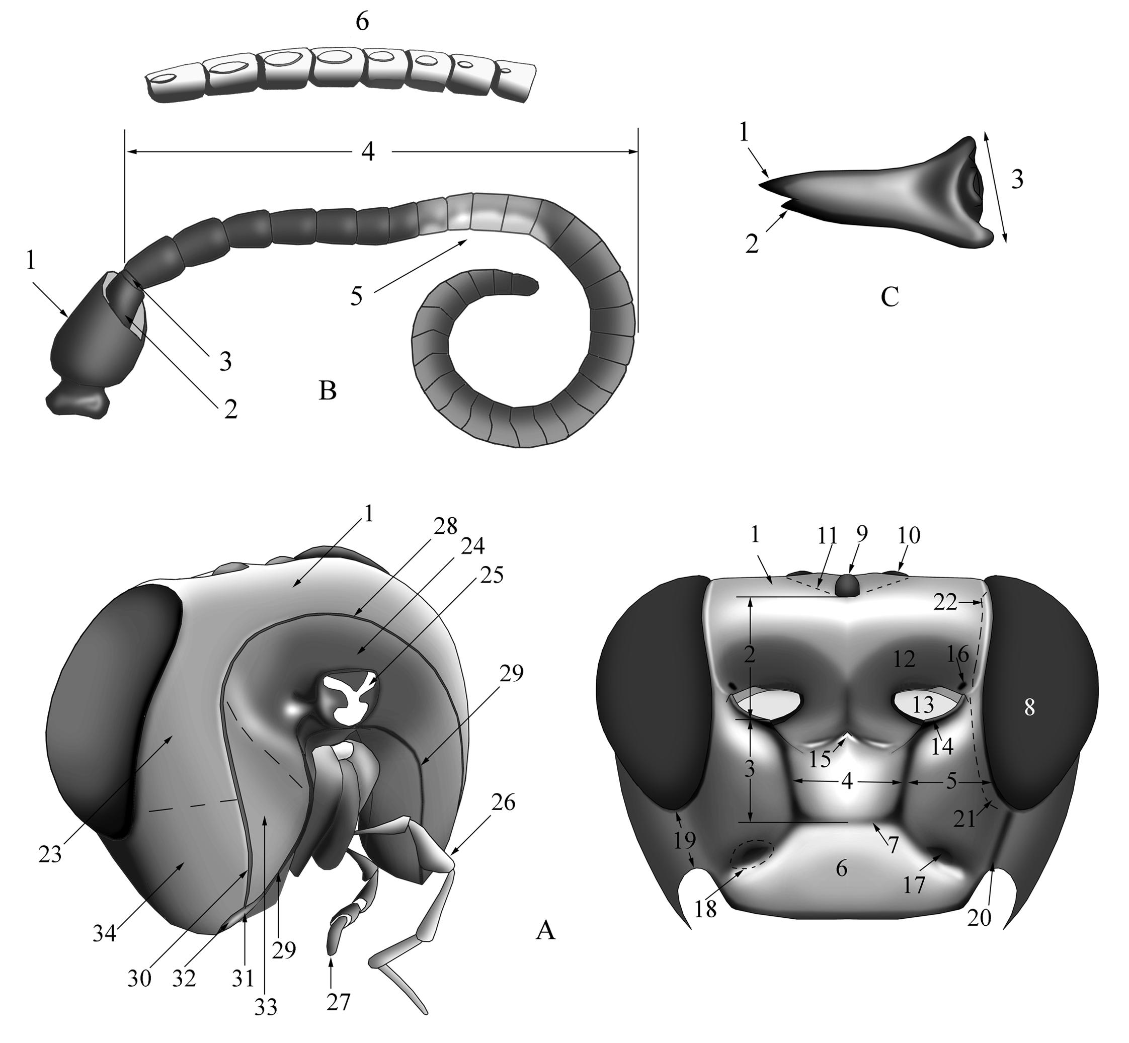Biologiezentrum linzaustria download unter wwwbiologiezentrumat
