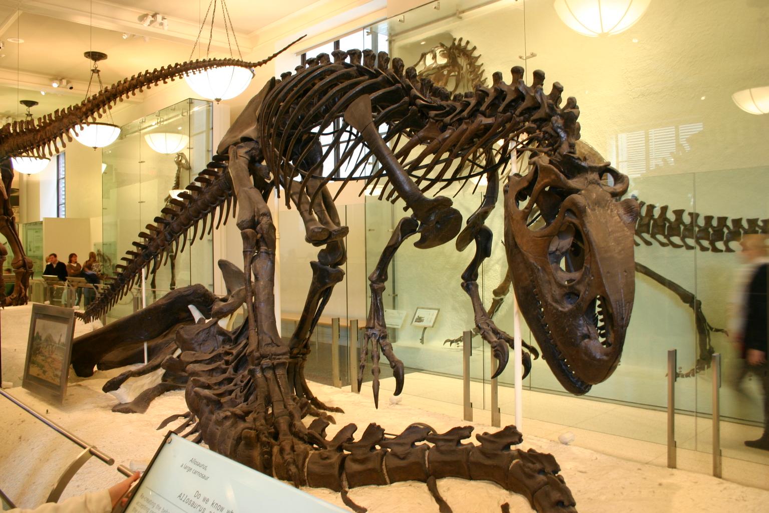 halloween natural history museum